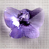 CRYSTALLIZED™ 6754 butterfly pendant violett (371), 18mm, 1 Stck.